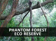 Phantom Forest3 264121 185x136
